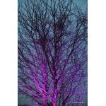 Colors_Tree_01.JPG